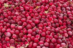 Замороженные cowberries ягоды Стоковые Фото