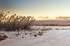 Замороженные Willowherbs полями Стоковые Фотографии RF