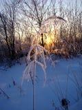 Замороженный ангел Стоковые Изображения RF