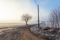 замороженный ландшафт Деревья и поляки вдоль дороги Стоковое Фото