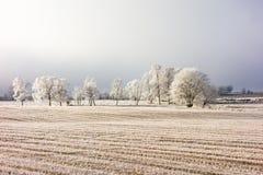 Замороженный ландшафт зимы стоковое фото rf