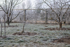Замороженный ландшафт сада с морозными деревьями и морозной травой Стоковые Изображения RF
