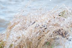 Замороженный брызг моря на траве Стоковое фото RF