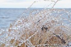 Замороженный брызг моря на траве Стоковое Изображение