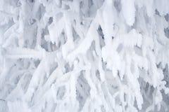 замороженный вал Стоковое Изображение RF