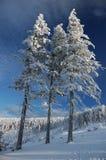 замороженный вал Стоковое Фото