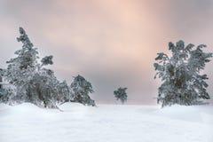 замороженный вал Стоковое Изображение