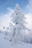 замороженный елью наклон лыжи Стоковые Изображения RF