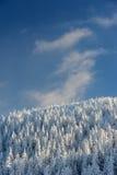 Замороженный лес в горах и голубом небе Стоковые Изображения RF