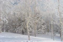 Замороженный лес в русских горах Стоковая Фотография
