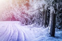 Замороженный лес при путь покрытый с снегом стоковая фотография rf