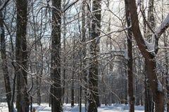 Замороженный лес Стоковые Изображения
