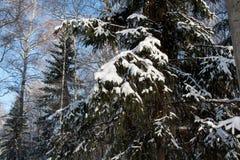 Замороженный лес Стоковое Изображение RF