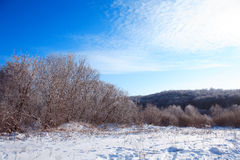 Замороженный лес Стоковое Фото