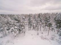 Замороженный лес стоковое фото rf