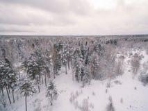 Замороженный лес стоковая фотография