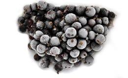 Замороженный крупный план blackcurrant ягод Стоковые Изображения RF