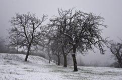 Замороженный ландшафт зимы с деревьями стоковое фото
