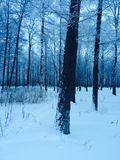 Замороженный лес стоковое изображение