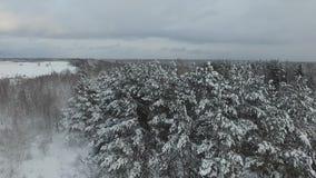 Замороженный лес сток-видео