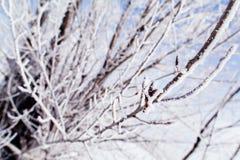Замороженный макрос деревьев Стоковое Изображение RF