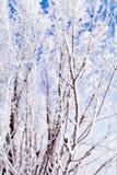 Замороженный макрос деревьев Стоковая Фотография