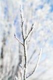 Замороженный макрос деревьев Стоковые Изображения RF
