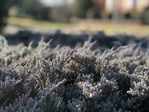 Замороженный макрос травы стоковое фото rf