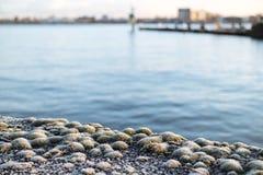 замороженный мох Стоковые Изображения RF