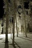 замороженный парк ночи Стоковое фото RF