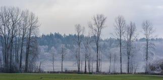 Замороженный парк Стоковое Изображение