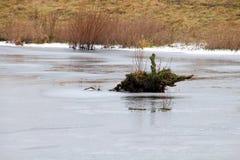 Замороженный пень дерева в озере Стоковая Фотография