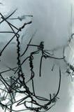 Замороженный переплетенный провод Стоковая Фотография