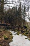 Замороженный поток в деревьях глубокого леса больших старых растет вокруг стоковое фото rf