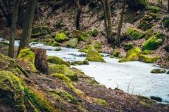 Замороженный поток в деревьях глубокого леса больших старых растет вокруг стоковое изображение rf