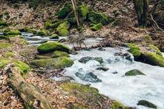 Замороженный поток в деревьях глубокого леса больших старых растет вокруг стоковое фото