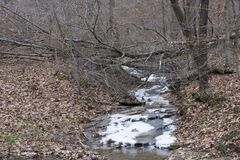 Замороженный поток в лесе стоковая фотография rf