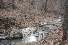 Замороженный поток в лесе стоковые изображения