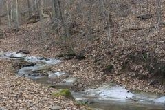 Замороженный поток в лесе стоковые фото