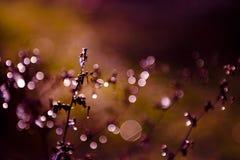 Замороженный полевой цветок в заходе солнца на зиме Стоковые Фото
