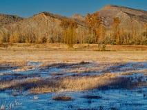 Замороженный пруд утки в ноябре стоковые фото