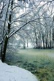 замороженный пруд Стоковые Фото