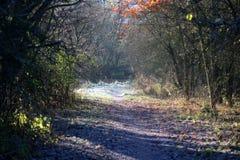 Замороженный путь в лесе Стоковое Изображение RF