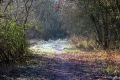 Замороженный путь в лесе Стоковое фото RF