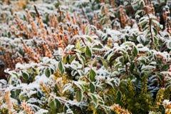 замороженный сад Стоковые Фотографии RF