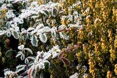 замороженный сад Стоковое Изображение