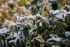 замороженный сад Стоковые Изображения