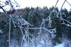 Замороженный сук Стоковая Фотография