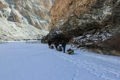 Замороженный трек реки Zanskar стоковые фотографии rf