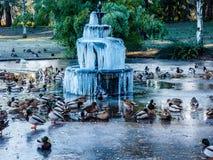 Замороженный фонтан на ледистом озере с утками Стоковые Фотографии RF